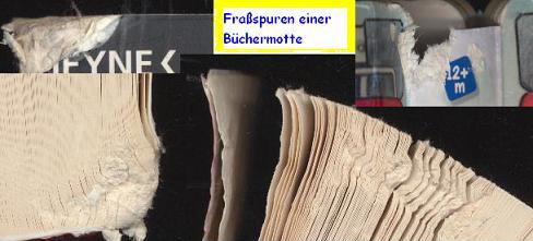 Fraßspuren einer Büchermotte